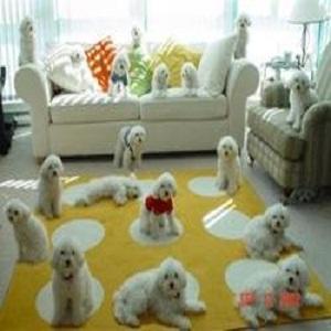 حکم نگه داشتن سگ در منزل چیست؟