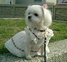 حکم و نظر مراجع در مورد خرید و فروش سگ